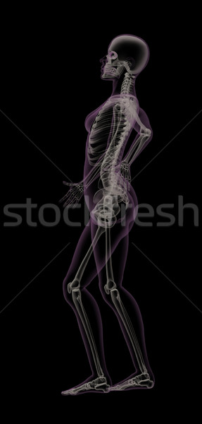 Stock fotó: Női · orvosi · csontváz · hátfájás · fájdalom · személy