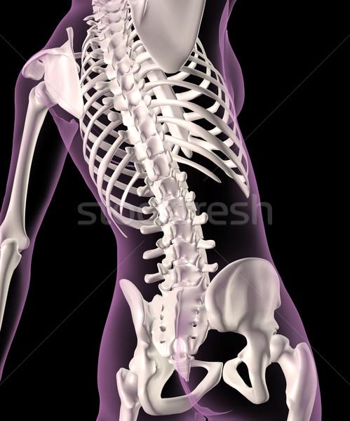 женщины скелет 3d визуализации медицинской позвоночник Сток-фото © kjpargeter