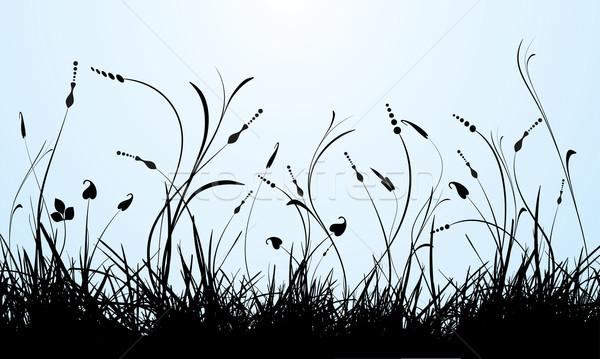Nem leírás virágok tavasz növény vektor Stock fotó © kjpargeter