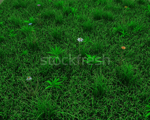 spring grass and flowers background Stock photo © kjpargeter