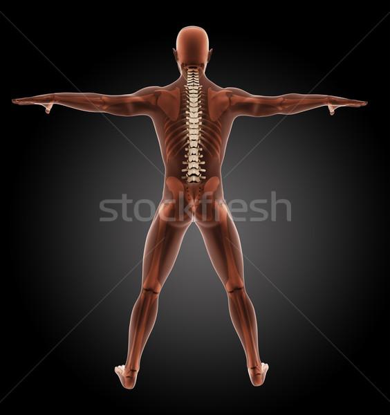 男性 医療 スケルトン 3dのレンダリング インテリア 人間 ストックフォト © kjpargeter