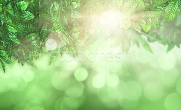 Leaves against a defocussed background Stock photo © kjpargeter