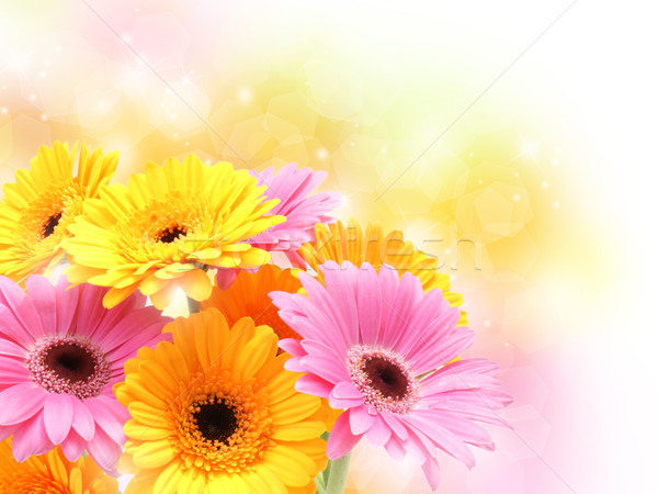 Gerbera daisies on pastel sparkly background Stock photo © kjpargeter