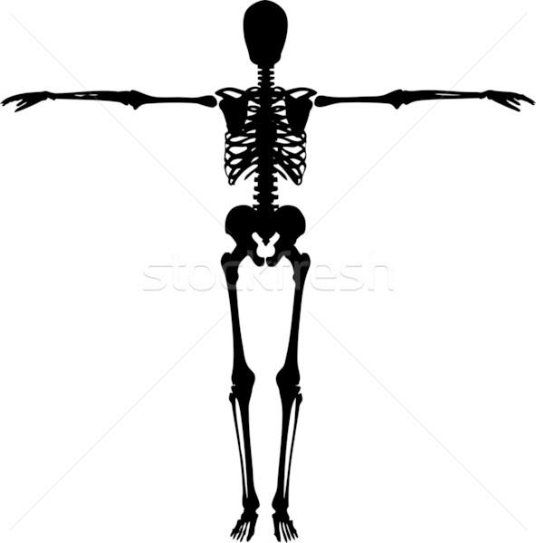 skeleton Stock photo © kjpargeter
