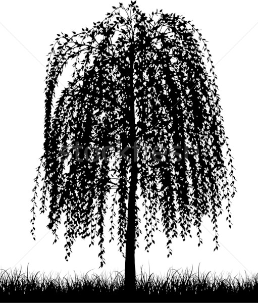 Weeping willow Stock photo © kjpargeter