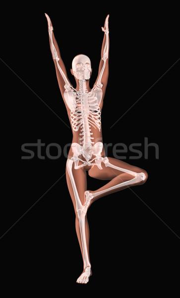 Stock fotó: Női · orvosi · csontváz · jóga · pozició · 3d · render