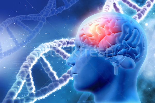 3D medical background with brain and DNA strands Stock photo © kjpargeter