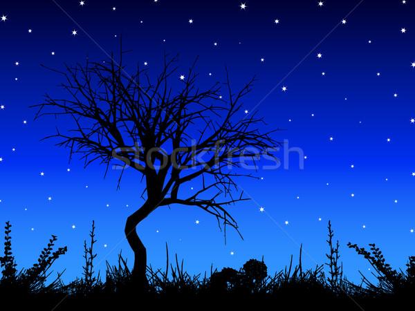 Fa csillagos ég sziluett növény Stock fotó © kjpargeter