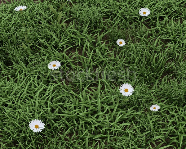 Tavaszi virágok virágzik 3d render virág fű nyár Stock fotó © kjpargeter