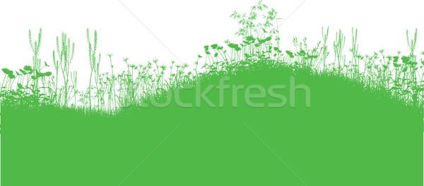 Natuur silhouetten gras bloemen landschap Stockfoto © kjpargeter