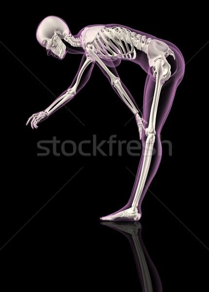 Női csontváz görbület 3d render személy emberi Stock fotó © kjpargeter