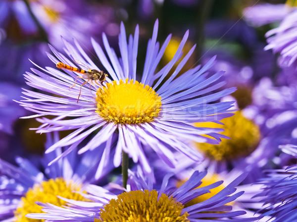 синий цветок небе солнце пейзаж саду лет Сток-фото © klagyivik