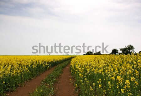 ground rape Stock photo © klagyivik
