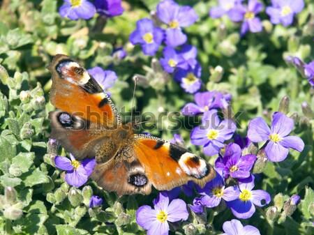 бабочка синий цветок весны трава лес дизайна Сток-фото © klagyivik