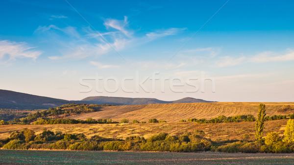 Berg veld boom landschap ontspannen zonsopgang Stockfoto © klagyivik