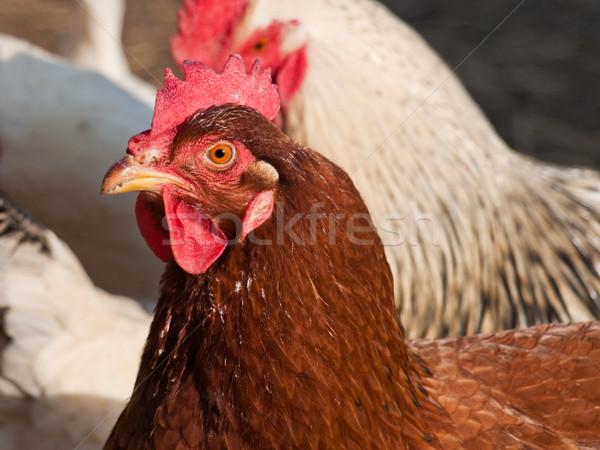 Stockfoto: Digitale · camera · ei · vlees · vrouwelijke · chick · eten