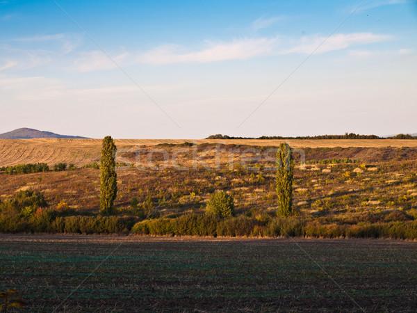 Hegy mező fa tájkép pihen napfelkelte Stock fotó © klagyivik