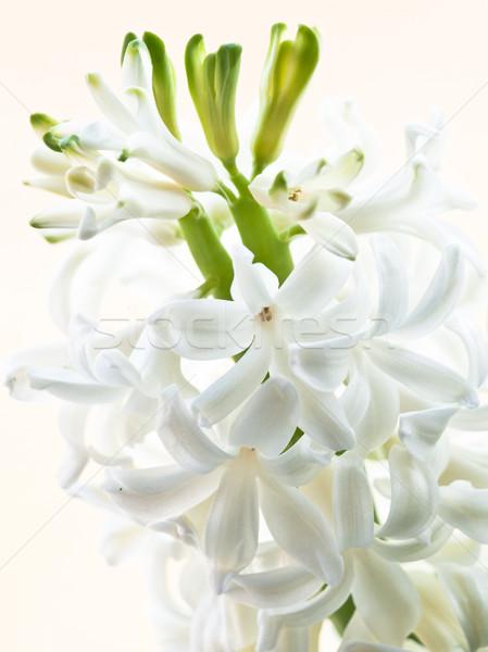 Branco jacinto natureza paisagem verde indústria Foto stock © klagyivik