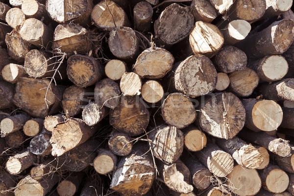 Boglya fából készült textúra fa ipar fa Stock fotó © klikk