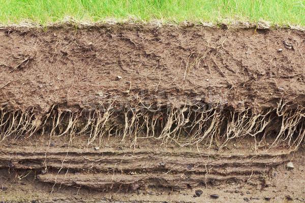Gleby przekrój ziemi korzenie warstwy brud Zdjęcia stock © klikk