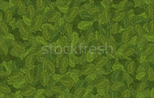 Groene bladeren groot bestand bladeren textuur voorjaar Stockfoto © klikk