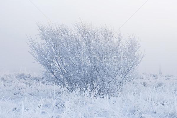 Ködös tél reggel magányos fa izolált Stock fotó © klikk