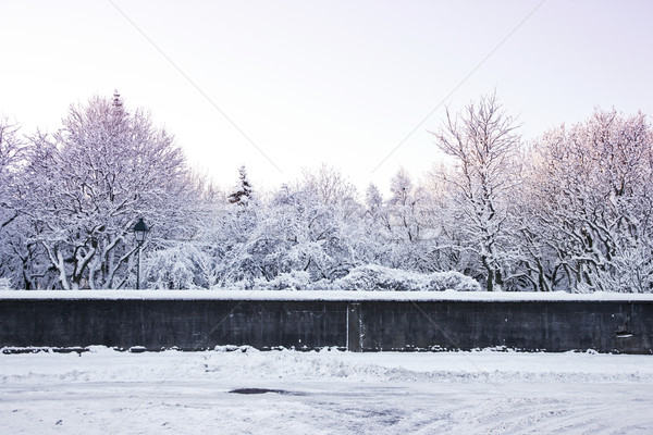 Snow covered park in the wintertime Stock photo © klikk