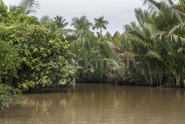 Dzsungel delta Vietnam tipikus kilátás növényzet Stock fotó © Klodien