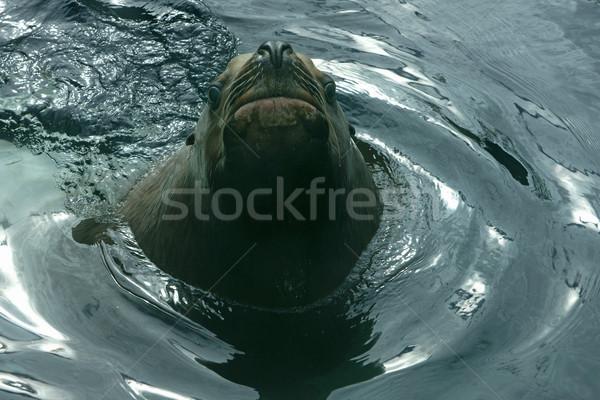 Szörny tenger fej fölött víz szem Stock fotó © Klodien