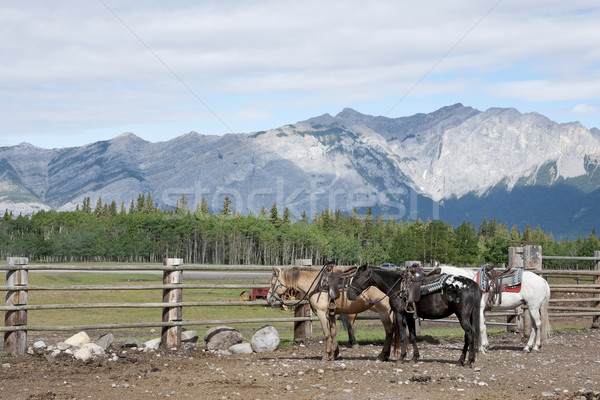 Három lovak várakozás korall békés kilátás Stock fotó © Klodien