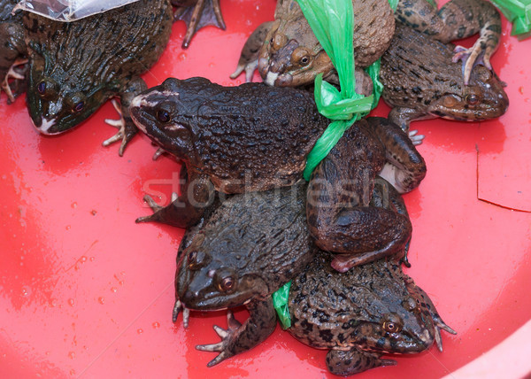 Stock photo: Vietnam Dong Hoi - thick fat living frogs for sale at market.
