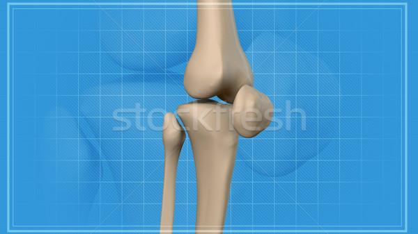 Anatomia joelho 3D esportes Foto stock © klss
