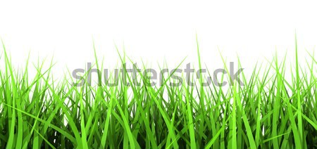 Groen gras witte 3D gegenereerde groene gras Stockfoto © klss