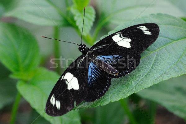 Stok fotoğraf: Kelebek · bitki