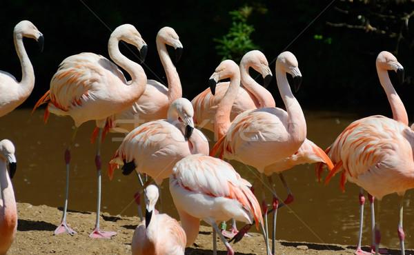 Rózsaszín csoport néz vibráló színes víz Stock fotó © KMWPhotography