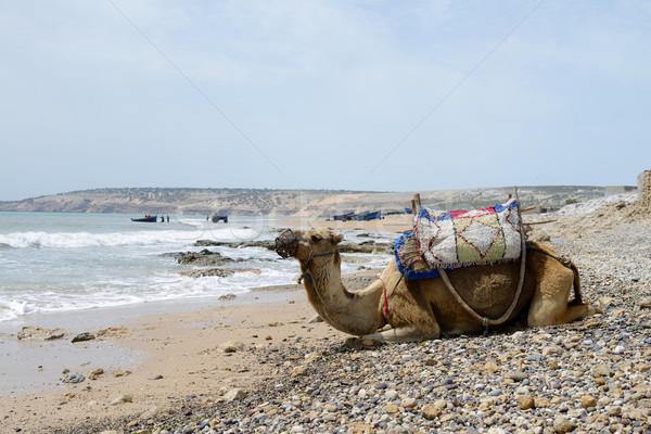 Marokkó teve tengerpart fényes napsütés tenger Stock fotó © KMWPhotography