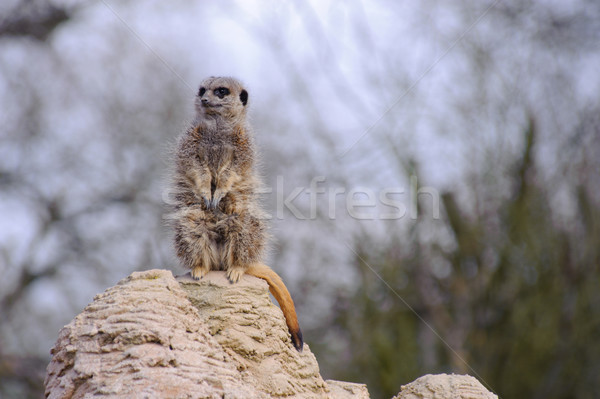 Regarder cute séance Rock Photo stock © KMWPhotography