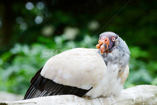 Koning gier tak naar kleurrijk Stockfoto © KMWPhotography