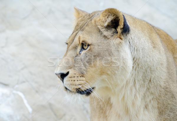 профиль голову лице женщины животного Сток-фото © KMWPhotography