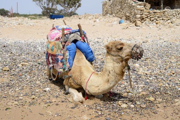 Teve pihen tengerpart Marokkó utazás forró Stock fotó © KMWPhotography