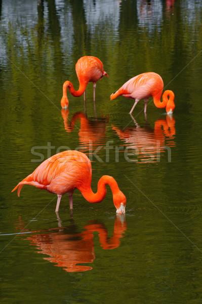 Három etetés medence élénk szín víz madarak Stock fotó © KMWPhotography