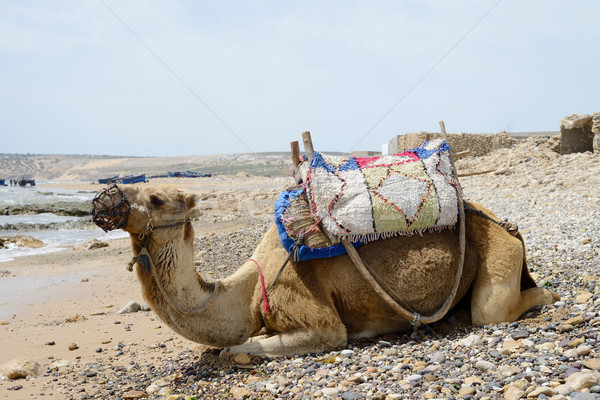 Fas deve plaj parlak güneş Stok fotoğraf © KMWPhotography