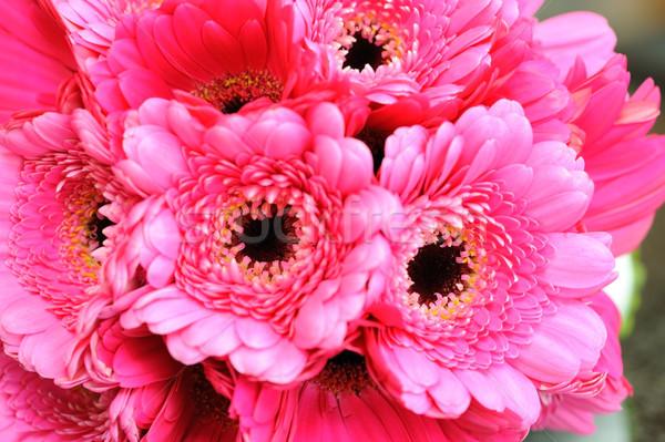 розовый цветы невест букет свадьба Сток-фото © KMWPhotography