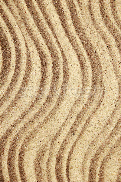 background of sand with shells on the beach Stock photo © koca777
