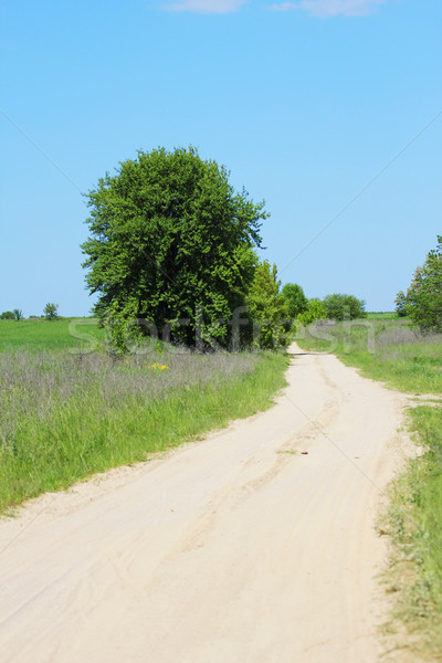 a few trees and a road on the nature Stock photo © koca777