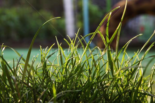 Herbe verte printemps herbe nature lumière cadre Photo stock © koca777