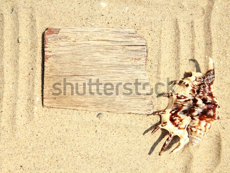 Sand background  and shell on the beach Stock photo © koca777