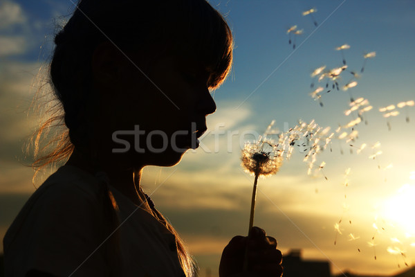 silhouette of a girl with dandelions Stock photo © koca777