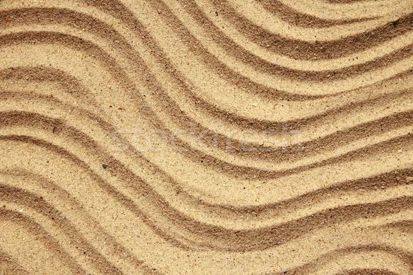 background sand and seashells Stock photo © koca777
