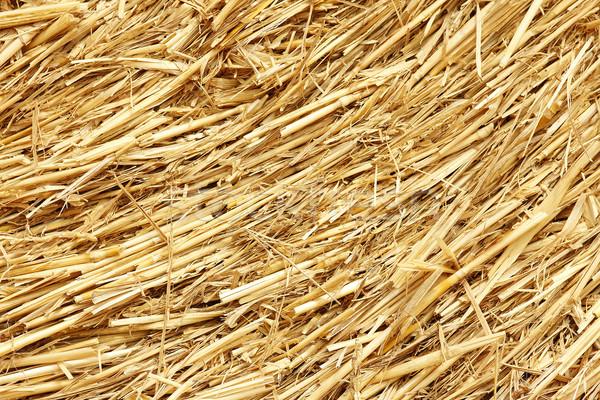 сено осень продовольствие фон лет Сток-фото © koca777